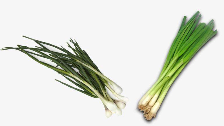 Scallions Versus Green Onions!